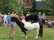 Ukážky výcviku koní